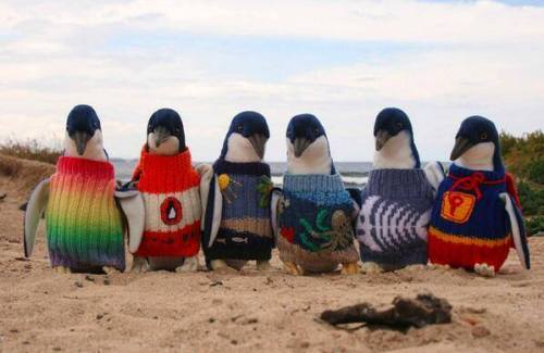 knitted penguin jumpers