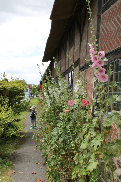 Hollyhock 2, photobombed by toddler twinnage