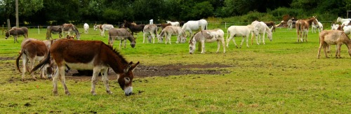 Rescued Donkeys :-)