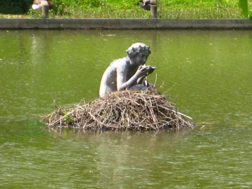 Coot Nesting On The Lady Of The Lake
