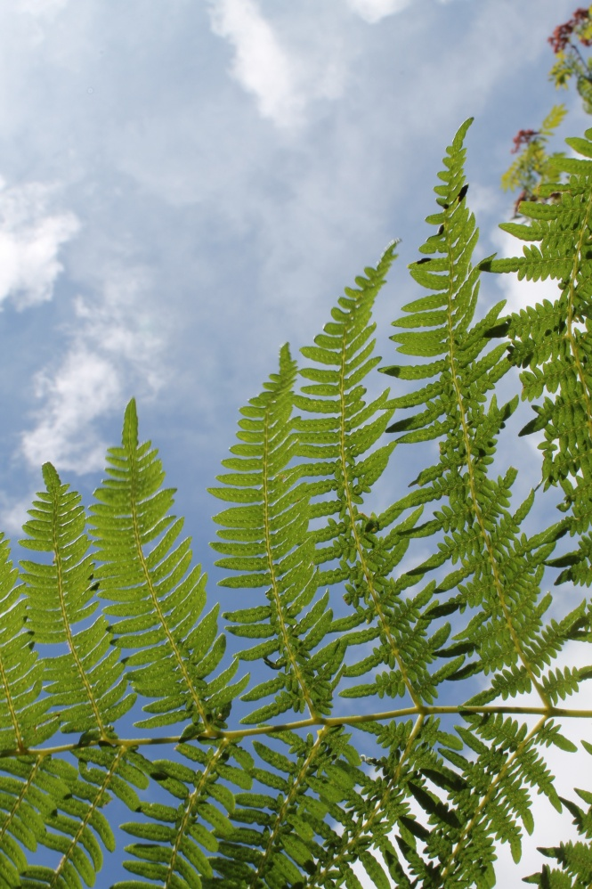 Bracken against sky
