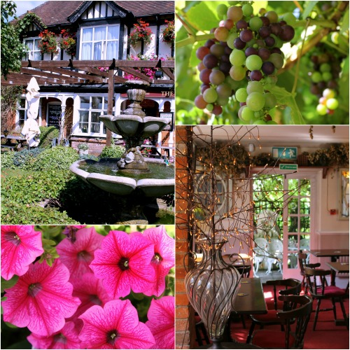 Hops suspended from the ceiling, bunches of grapes ripening in the garden, what's not to like?