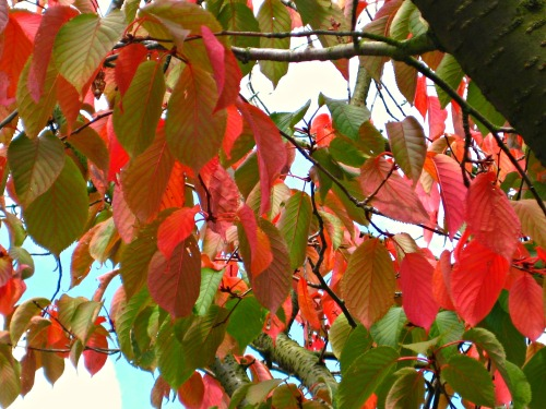 Summer and autumn leaves